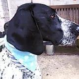 Eric the Dog, Cotton Boulevard